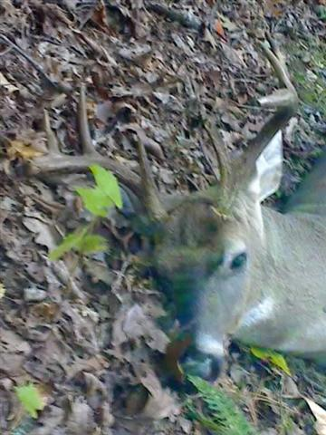 My best buck from Strawberry Mtn 10-19-08.