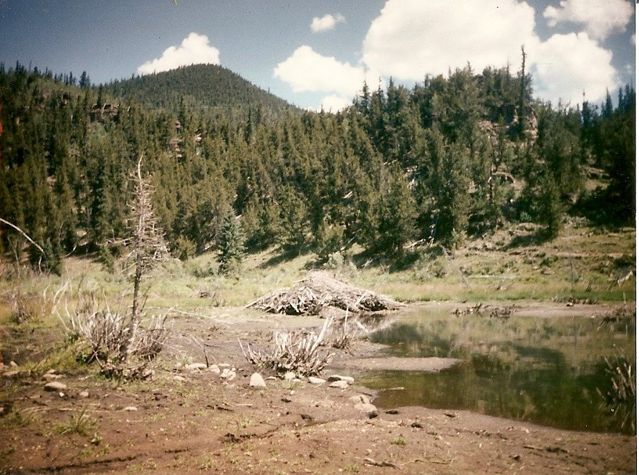 Beaver pond, Colorado