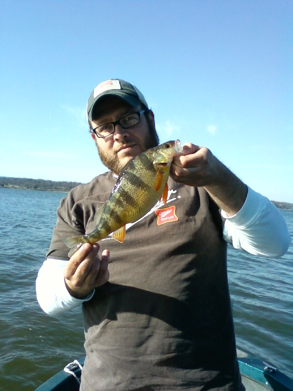 T.A.R.P Yellow Perch on the Chick.