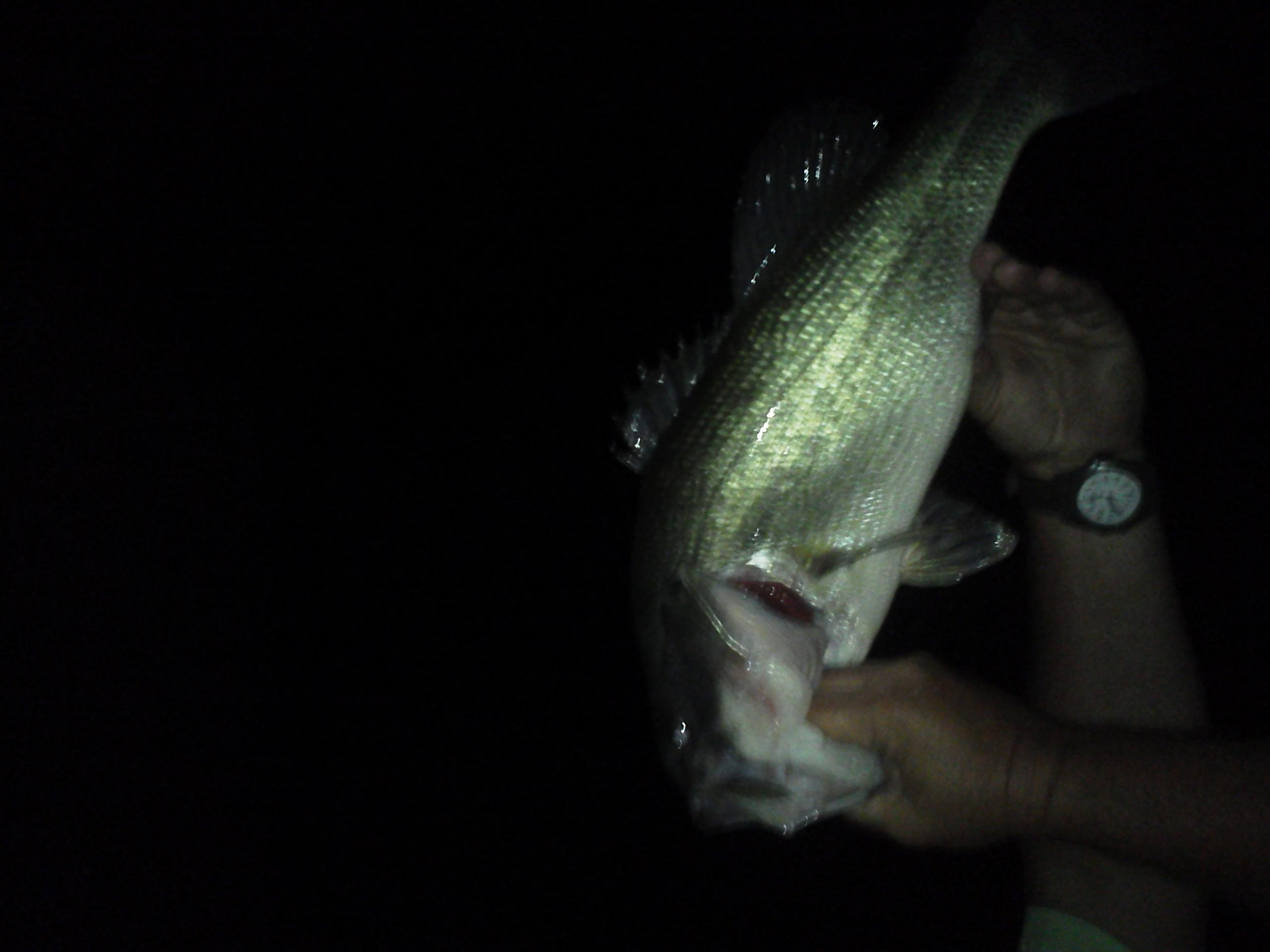 Night time pig hunt is always fun catching 6 pounders